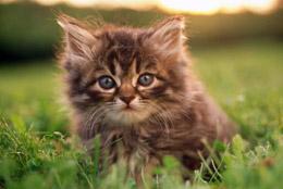 猫真菌感染