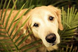 狗狗眼睛发红