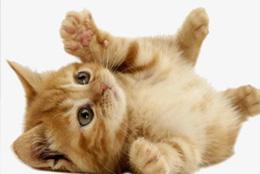猫感冒症状