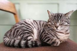 猫感冒怎么办